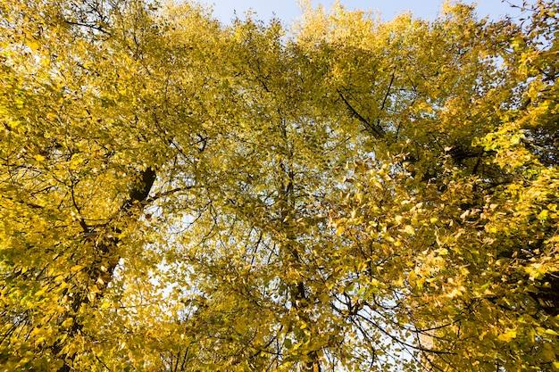 Ruhige herbstnatur mit vergilbtem laub von bäumen in der herbstsaison, warmes sonniges wetter im herbst anfang september.