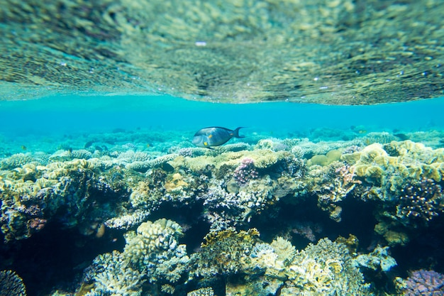 Ruhige unterwasserszene mit erstaunlichen korallen