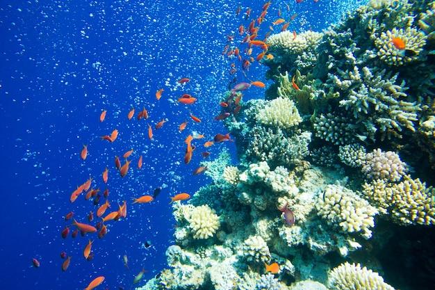 Ruhige unterwasserszene mit fischen und korallen