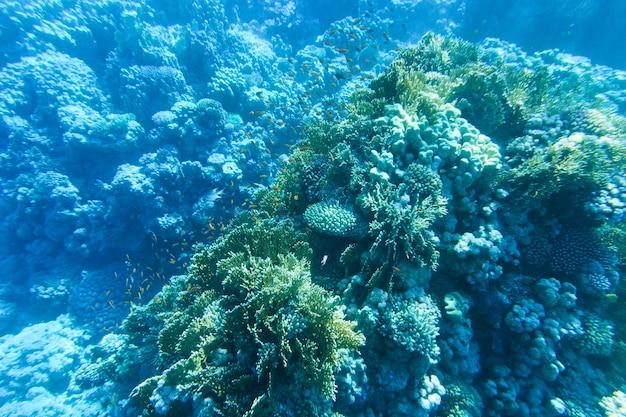Ruhige unterwasserszene mit kopierraum