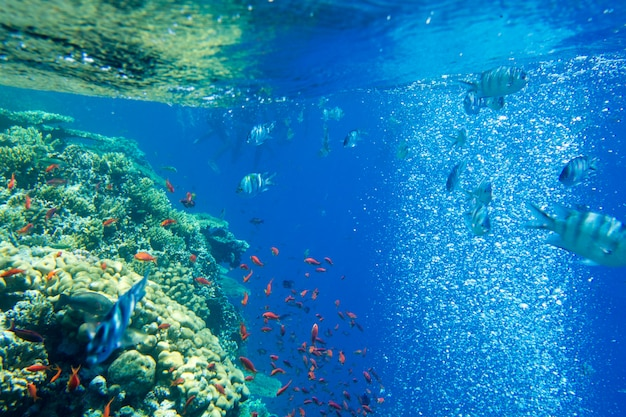 Ruhige unterwasserszene