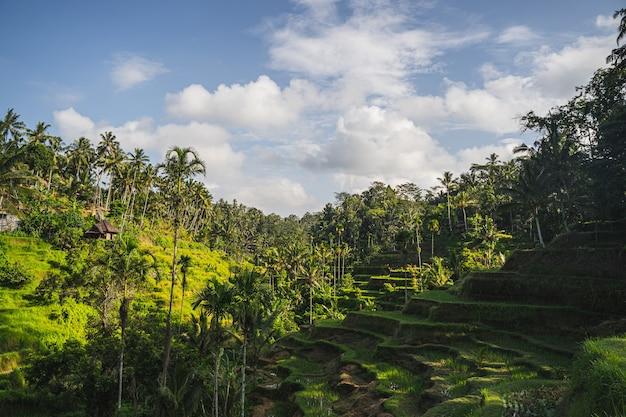 Ruhiger ort auf der insel, tropisches klima und reis, der auf den terrassen wächst stockfoto