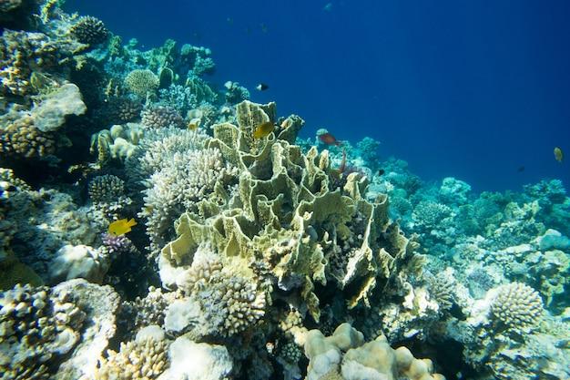 Ruhiger unterwasserhintergrund