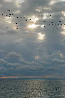 Ruhiges meer und blauer himmel mit weißen cirruswolken. die sonne scheint durch die wolken. ein vogelschwarm fliegt am himmel. gefühl von ruhe, kühle, entspannung.