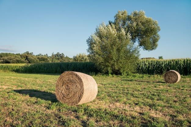 Rundballen heu geerntet auf einem landwirtschaftlichen gebiet