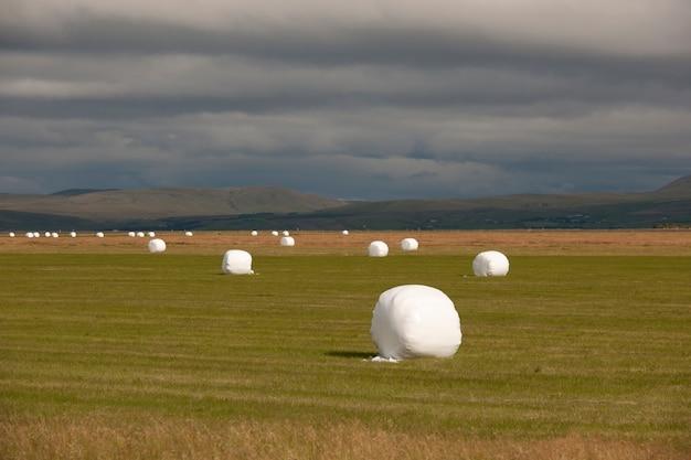Runde strawbales, die im plastik eingewickelt werden, schauend wie eibische auf ackerland mit schwarzen wolken