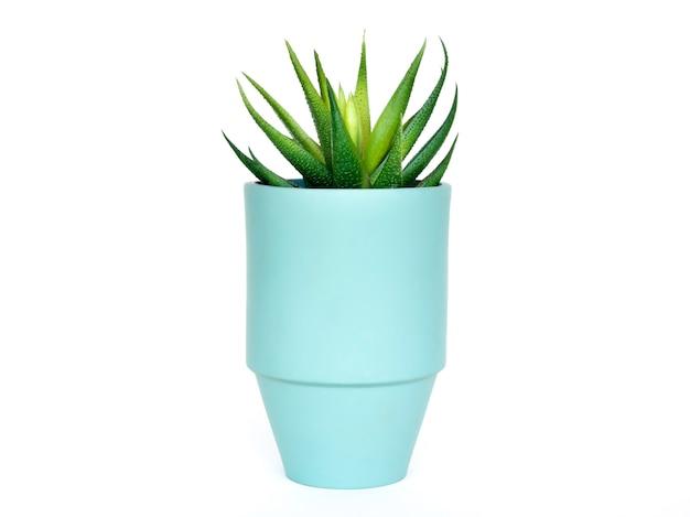 Runder moderner keramiktopf hellgrüne farbe mit grüner sukkulente isoliert auf weißer oberfläche.