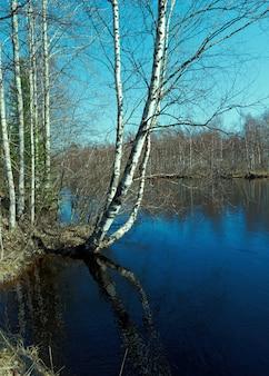 Russische landschaft.frühlingsüberschwemmungen in der region archangelsk