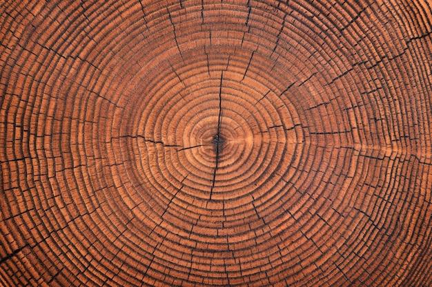 Rustikaler tisch mit jahresringmuster. holzstruktur geschnittener stumpfhintergrund
