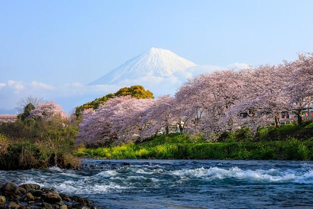 Ryuganbuchi in der stadt fuji, präfektur shizuoka, ist eine der beliebtesten kirschblüten