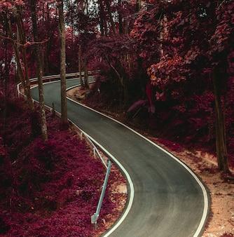 S-kurve weg in der surrealen farbe des waldes