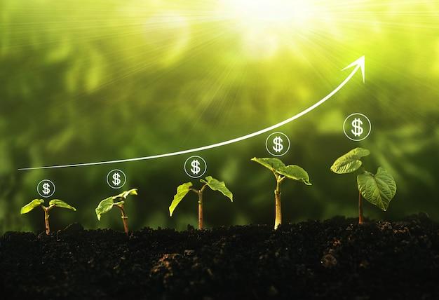 Sämling, der schritt im garten mit dollarikone und diagramm auf sonnigem hintergrund wächst. konzept von geschäftswachstum, gewinn, entwicklung und erfolg.