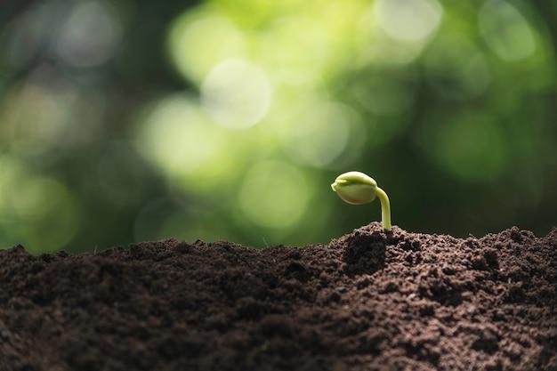 Sämling und anlage, die im boden und im exemplarplatz wachsen