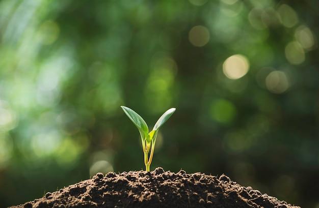 Sämling und pflanze, die im boden- und exemplarplatz wächst