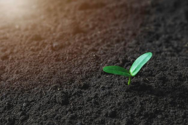 Sämling und pflanze, die im boden wachsen