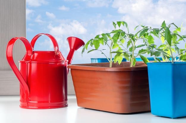 Sämling von pflanzen in töpfen und gießkanne auf fensterbank