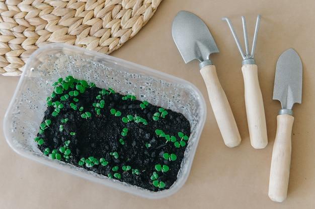Sämlinge in töpfen. pflanzwerkzeuge zum pflanzen von blumen und kräutern. frühe sämlinge werden aus samen in kisten zu hause auf der fensterbank gezüchtet.