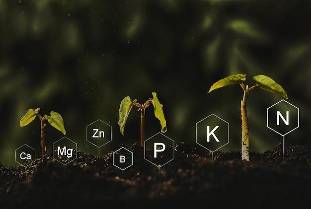 Sämlinge sind üppig von reichlich lehmigen böden. entwicklung und rolle von nährstoffen im pflanzenleben mit digitalem mineralstoff-symbol