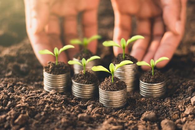 Sämlinge wachsen auf münzen, die auf dem boden gestapelt sind