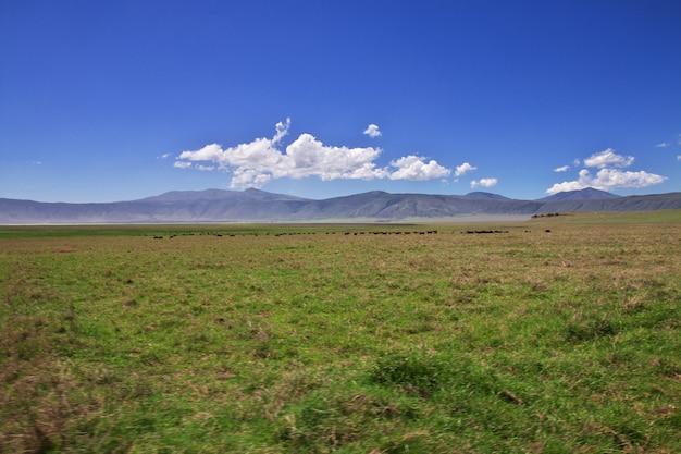 Safari in kenia und tansania, afrika