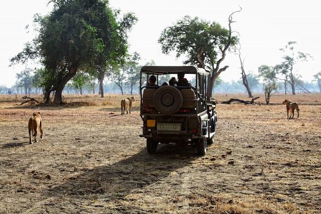 Safari in sambia
