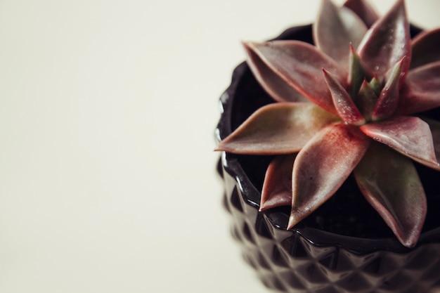 Saftig auf dem hintergrund das konzept der gemütlichen hausblume