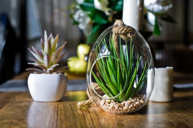Saftig in einem glastopf, zimmerpflanzenkaktus. design, interieur, minimalismus. seitenansicht