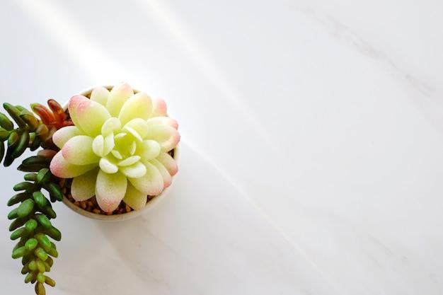 Saftige anlage auf weißem marmorhintergrund mit kopienraum, zimmerpflanzedesignhintergrund, fahne für text
