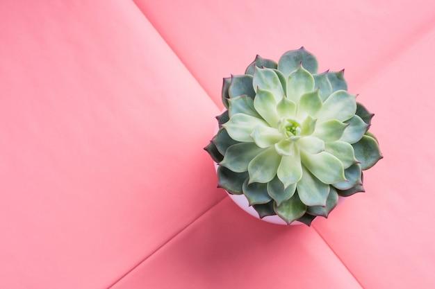 Saftige pflanze im topf auf rosa entfaltetem papier