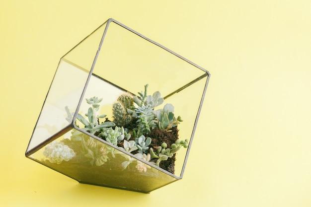 Saftige pflanze