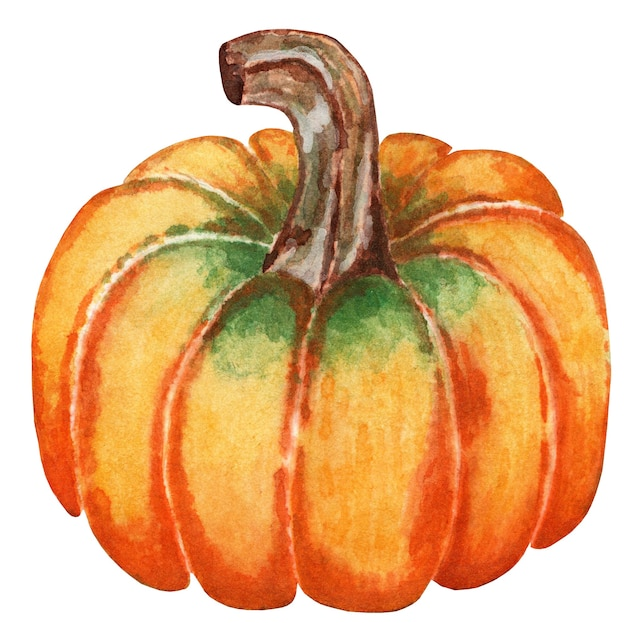 Saftige reife orange kürbis illustration für halloween und thanksgiving day isolirvan auf einem weiß