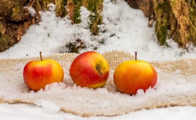 Saftige reife rote äpfel unter baum im snow_