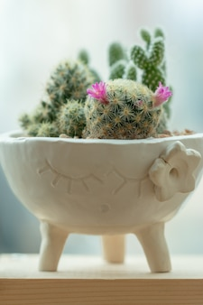 Saftiger kaktus in einem keramiktopf
