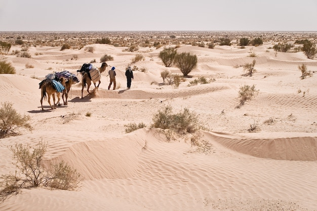 Sahara desert guide und kamel