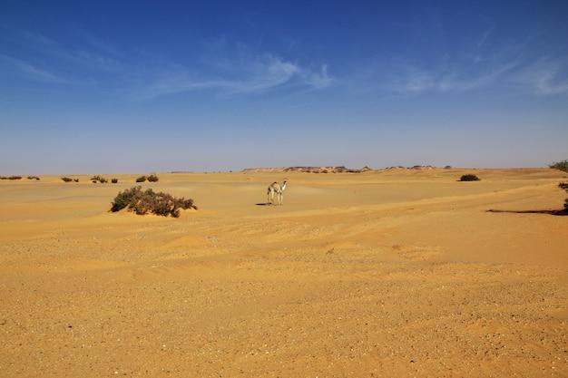 Sahara-wüste im sudan, afrika