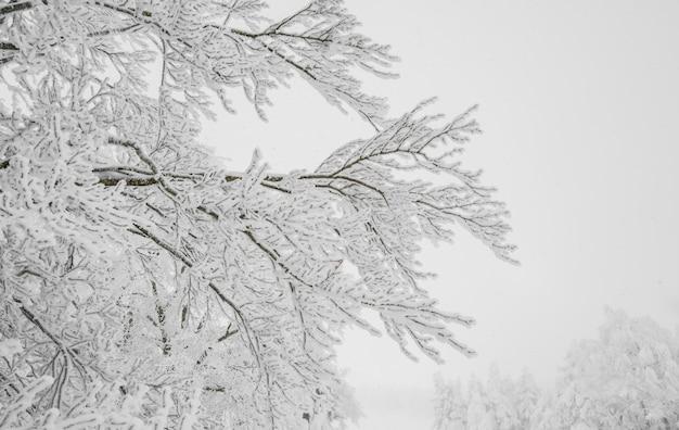 Saison reise schnee hügel natur