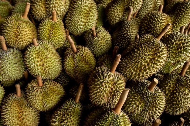Saisonaler durian wird an händler für den export nach china verkauft.