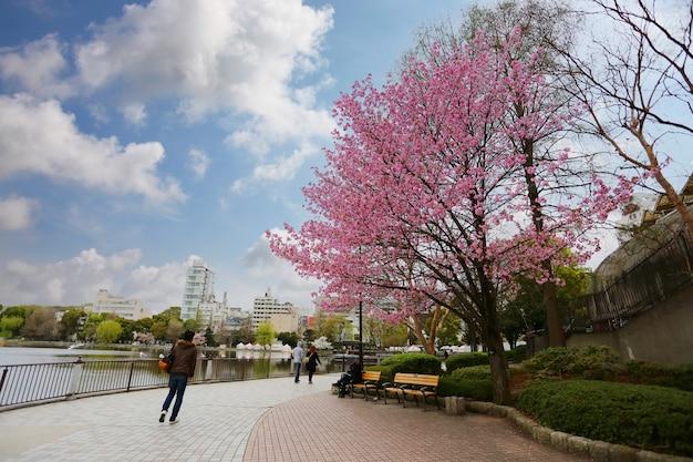 Sakura-baum mit blüte im ueno park, präfektur tokio in japan.