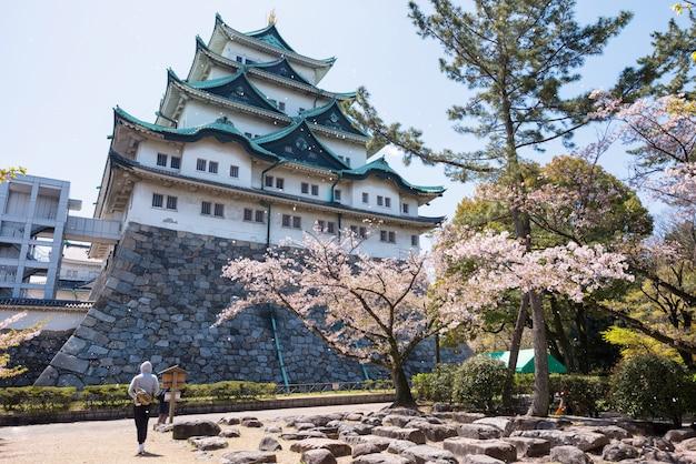 Sakura-blume, die am nagoya-schloss schwimmt