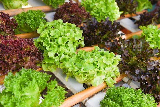 Salat aus grüner eiche und roter eiche