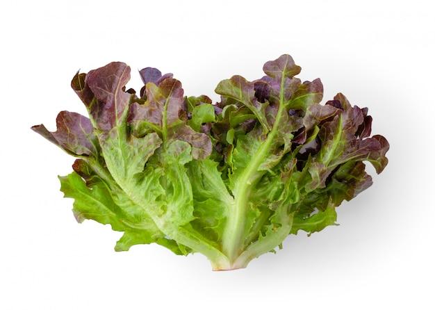 Salat aus roter eiche auf weißer wand.