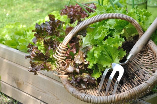 Salat im korb
