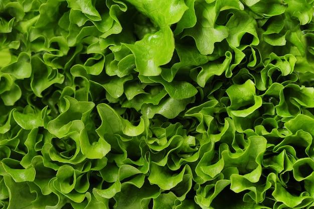 Salat nahaufnahme textur hintergrund