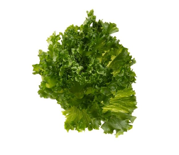 Salatblätter biosalat isoliert auf weißem hintergrund.