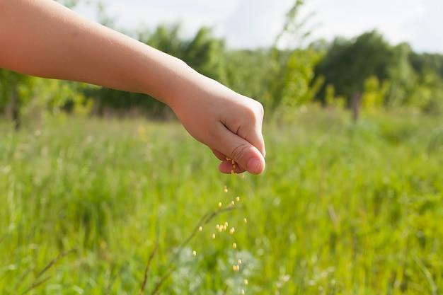 Samen fallen von einer hand auf grünem feld