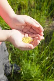 Samen fallen von einer hand auf grünem hintergrund.