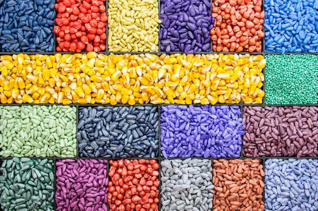 Samen sonnenblumenkerne, mais, radieschen. gemalte agrofarbe zum sortieren und etikettieren