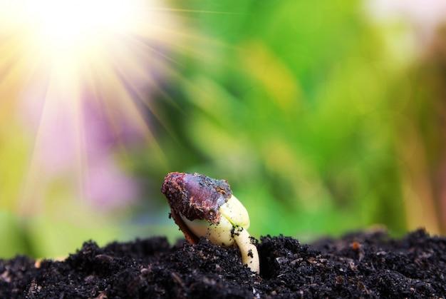Samen zum baum, saat, wachsendes konzept des pflanzensamen