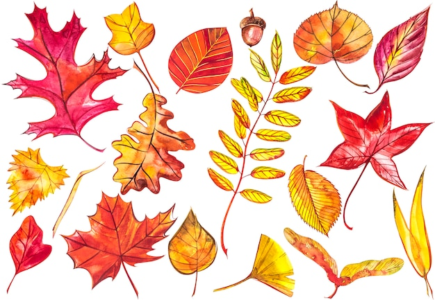 Sammeln sie schöne bunte herbstblätter lokalisiert. aquarellillustrationen.