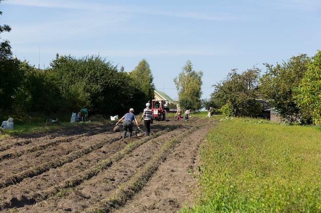 Sammeln von kartoffeln im dorf in einem nebenbetrieb. handarbeit und assistenz mit einem kleinen traktor. foto in hoher qualität